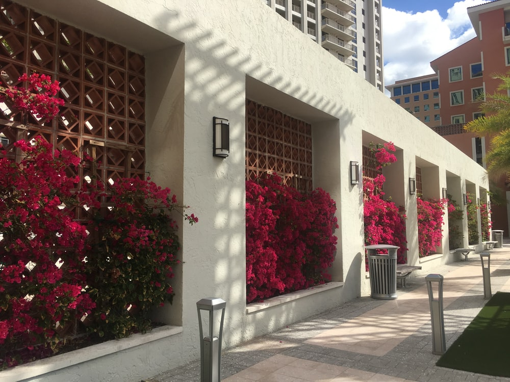 red flowers on building walls photo