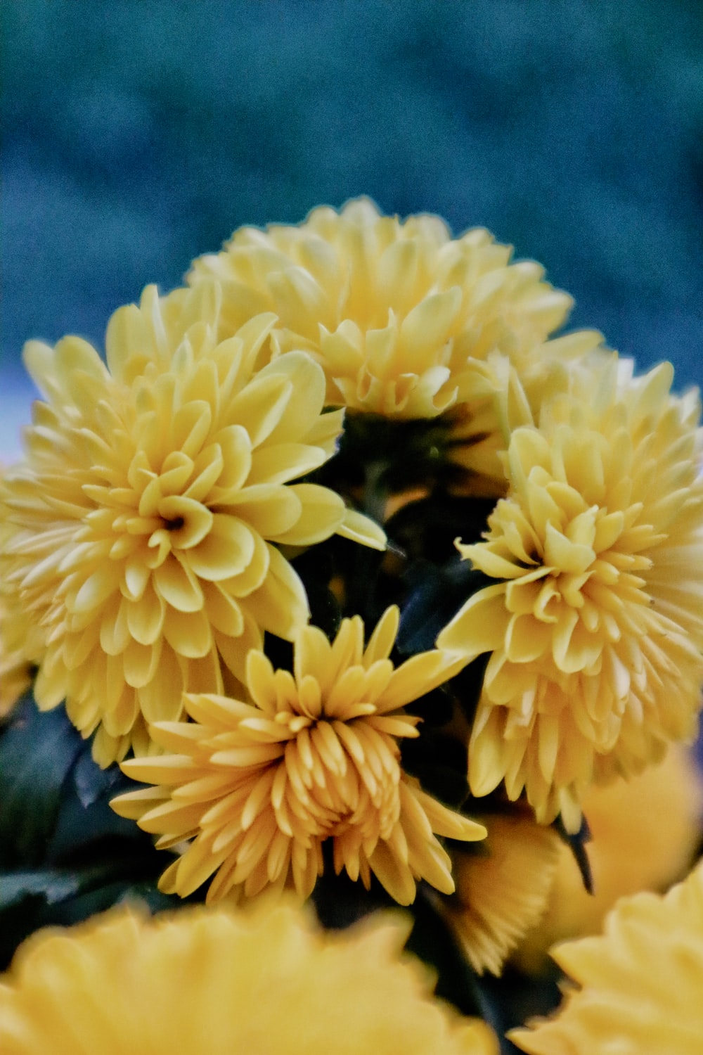 selective focus photo of yellow-petaled flowers bouquet