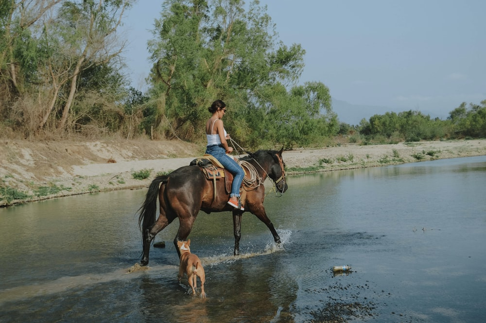 woman riding horse in body of water