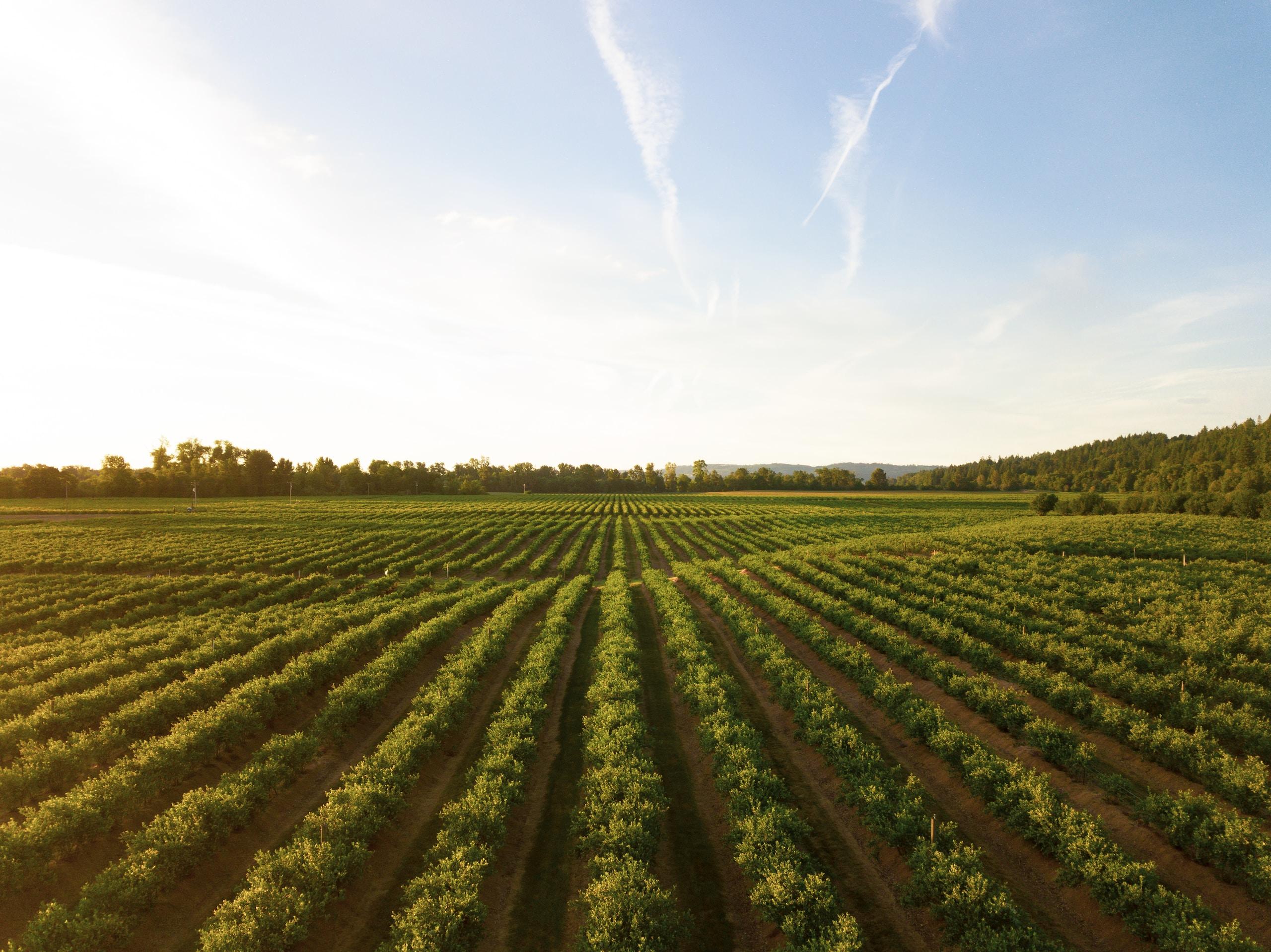 ISMEA Agevolazioni finanziarie settore agricoltura