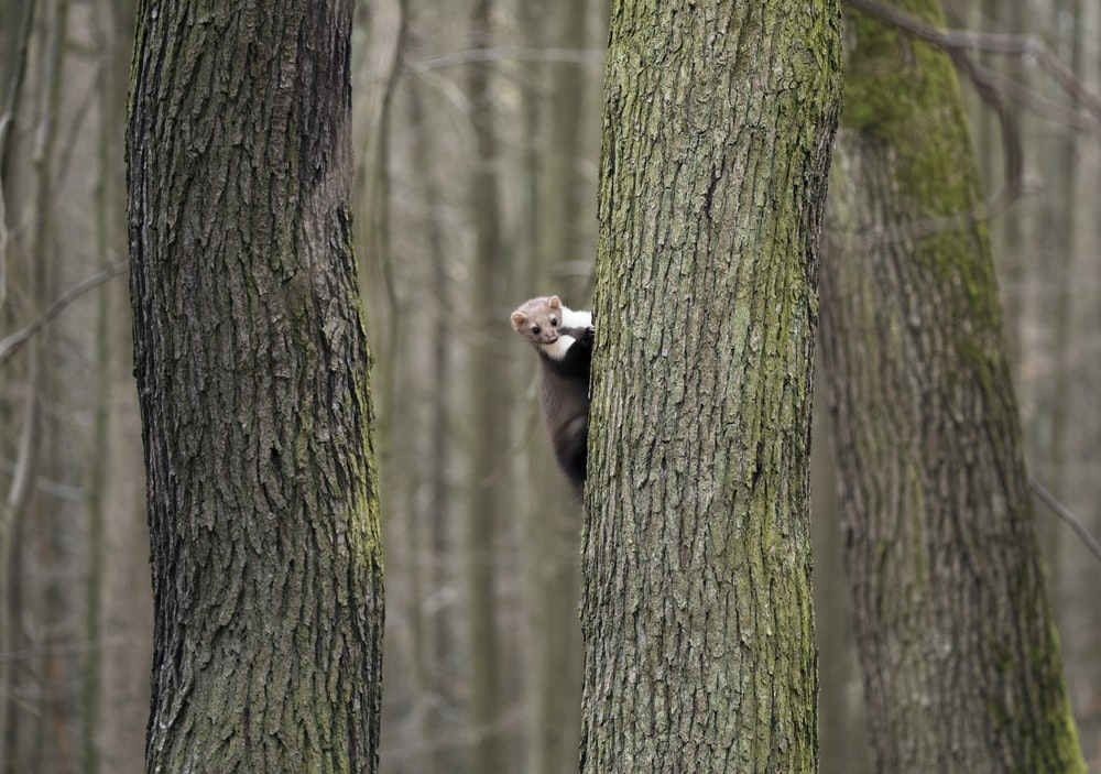 rodent climbing on tree