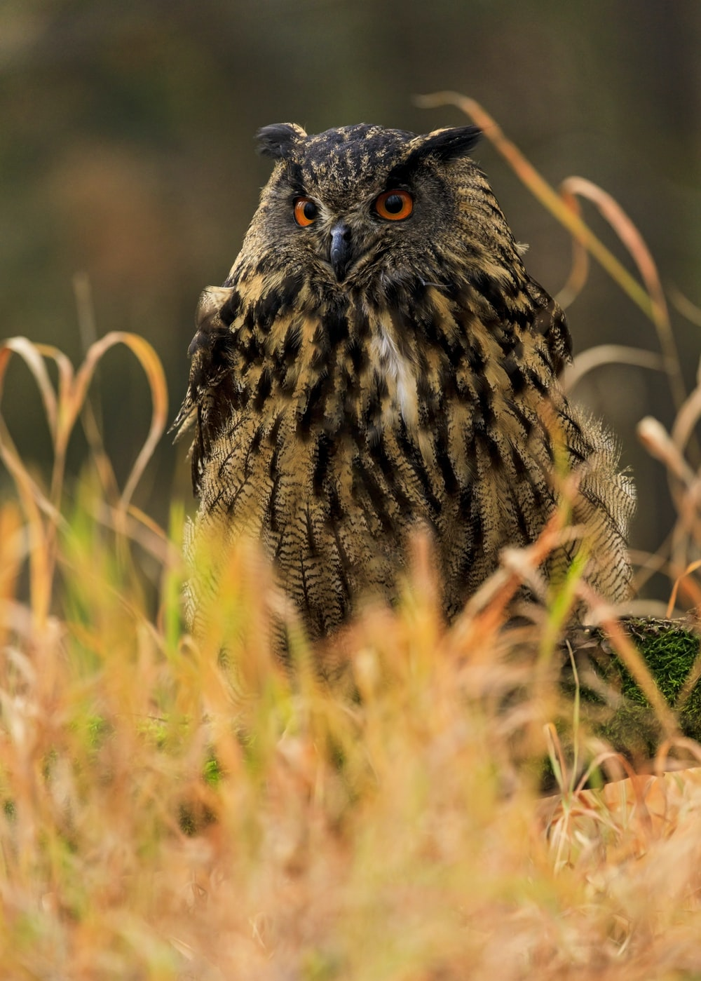 shallow focus photography of brown and black owl