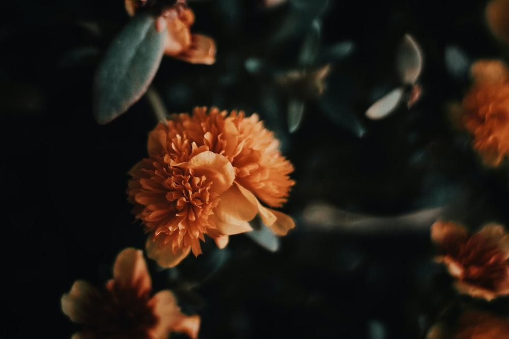 selected-focus of orange flower