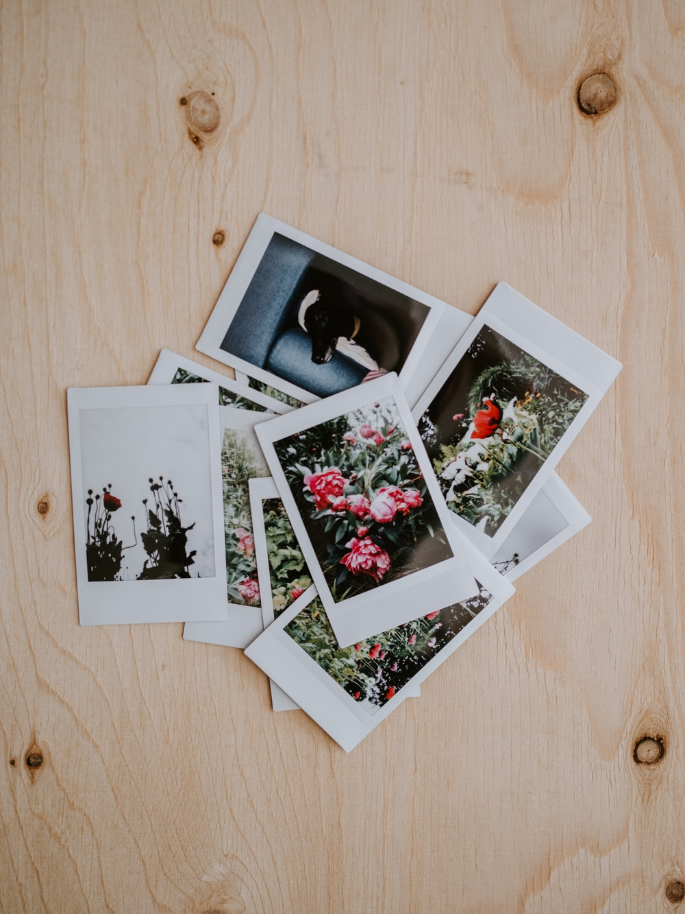 instant photos of flowers on brown wooden pane