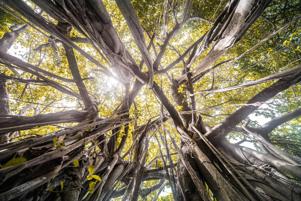 bare tree scenery