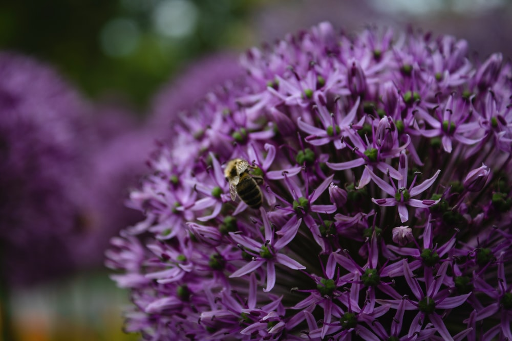 selective focus photography of purple cluster petaled flower
