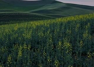 yellow petaled flower fields