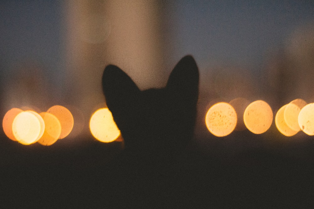 silhouette of animal