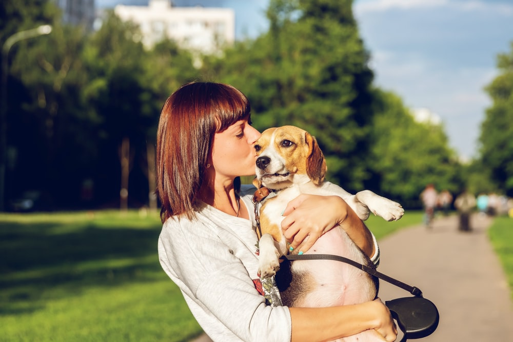 shallow focus photo of woman kissing brown and white dog