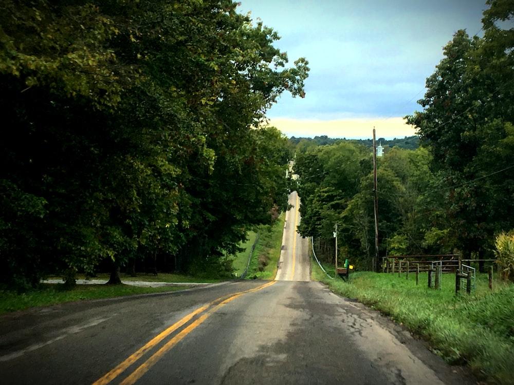 empty road between forest