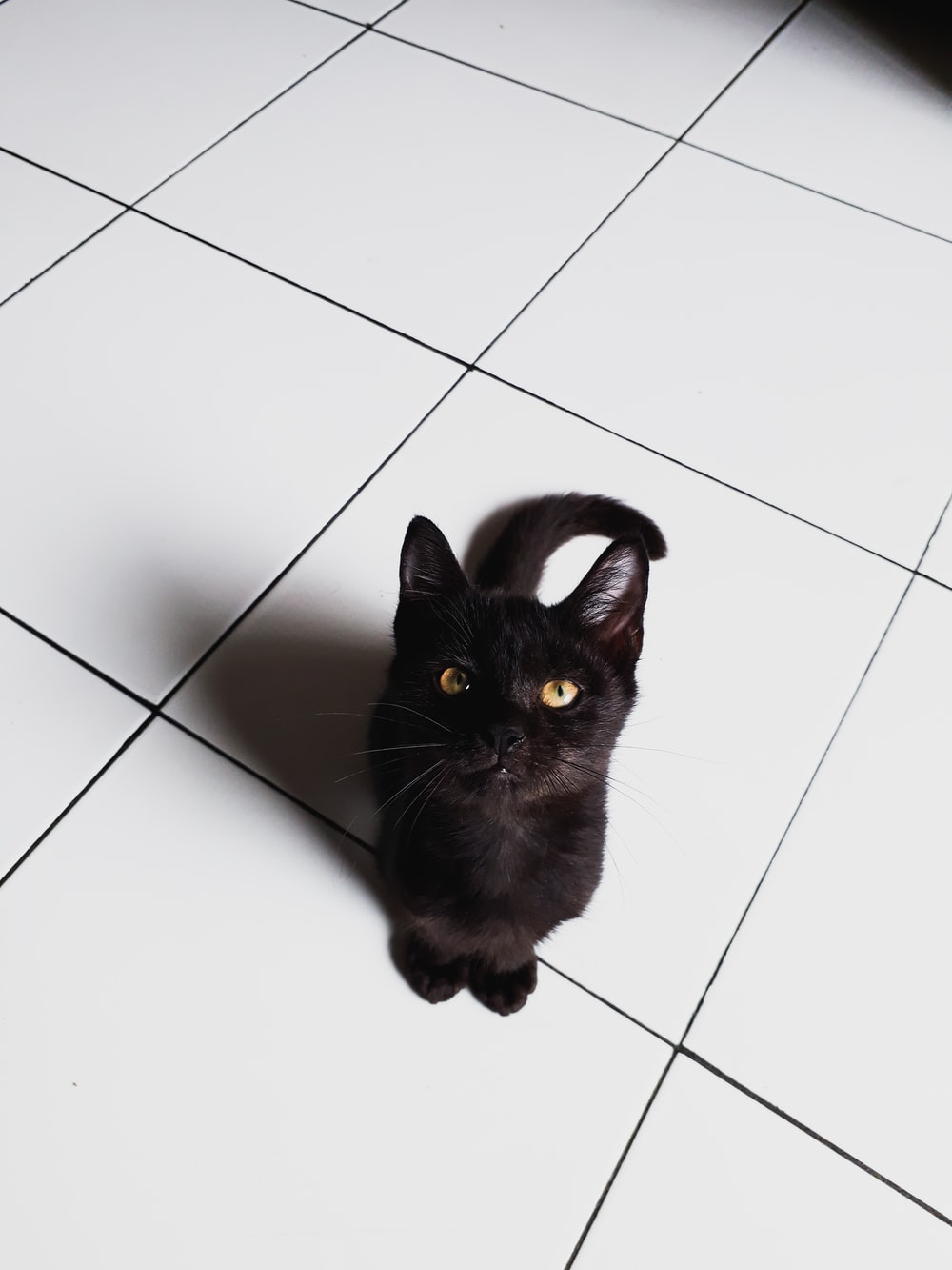 short-fur black cat on floor