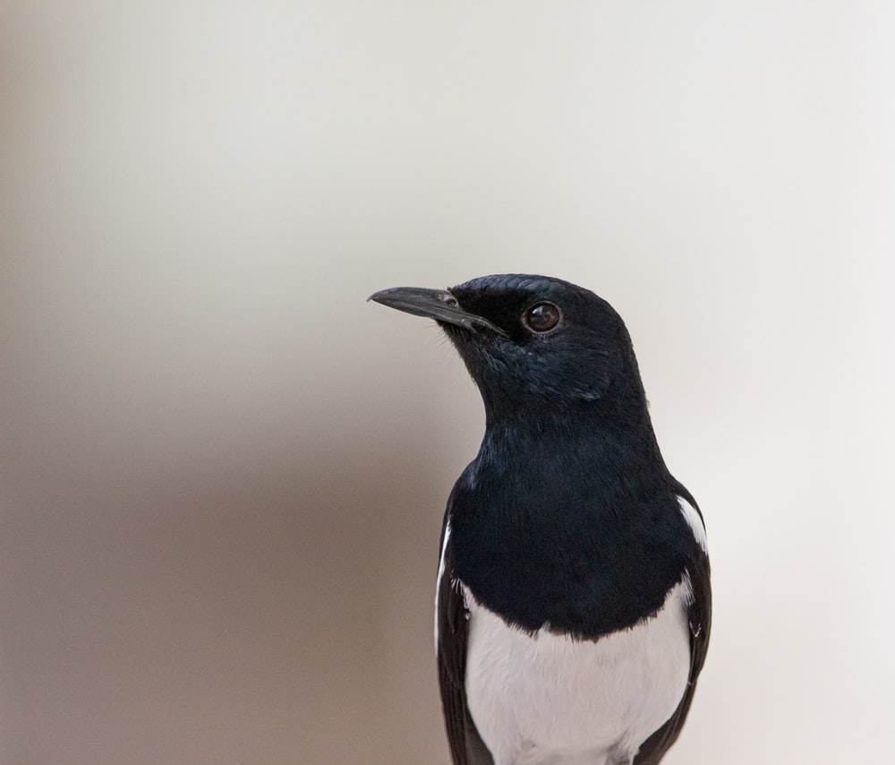 black and white bird during daytime