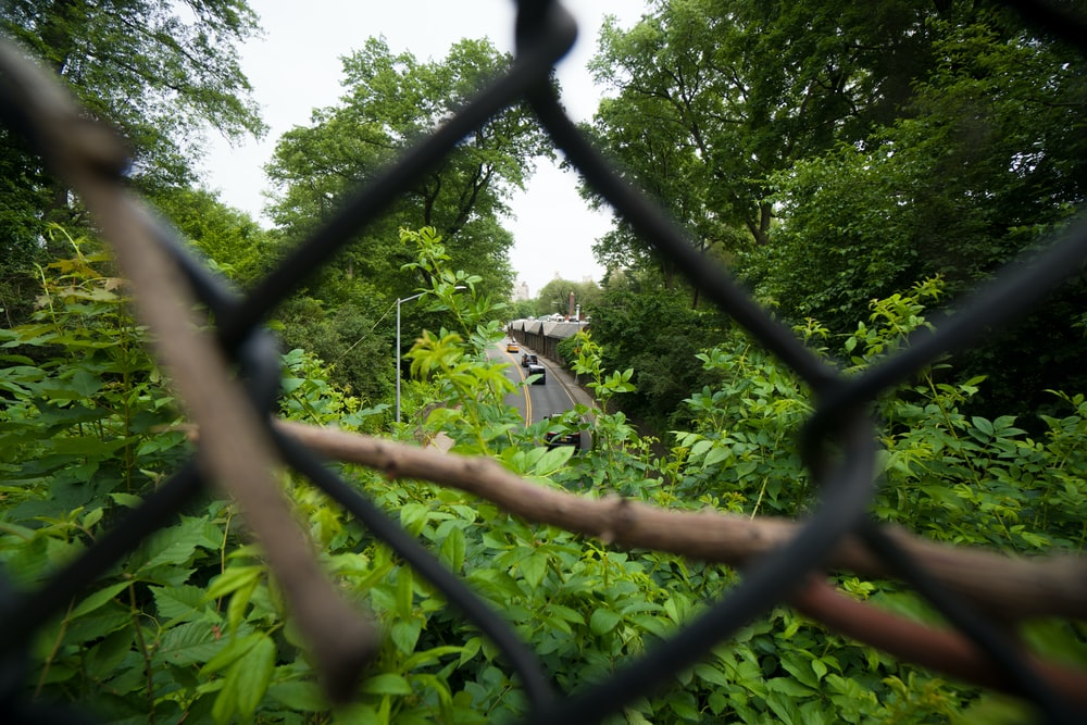 green trees through chain linked fence