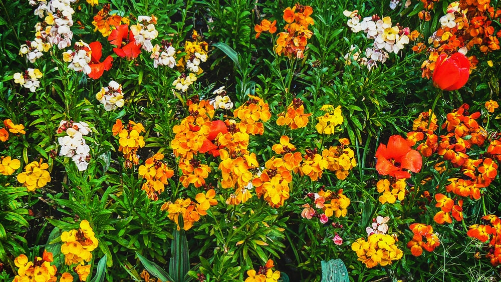 closeup photo of assorted-color flowers