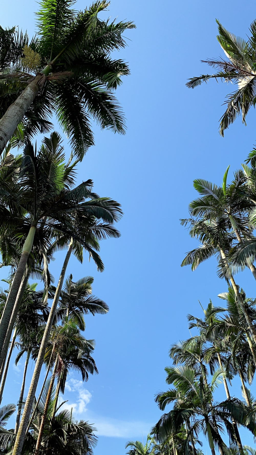 green coconut trees under blue sky in low angle photography