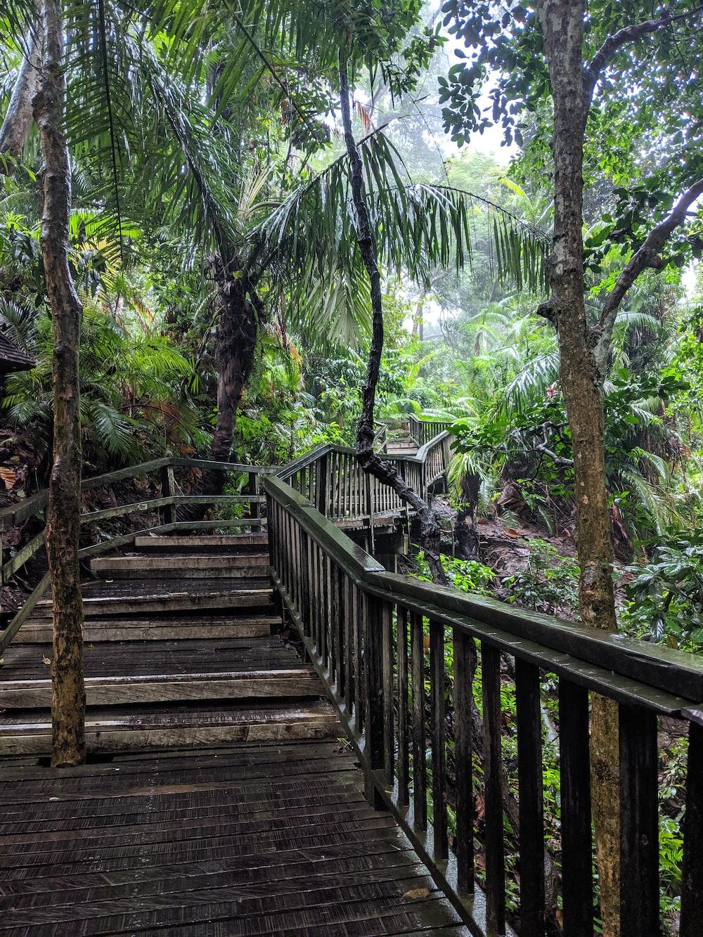 brown wooden bridge with handrails