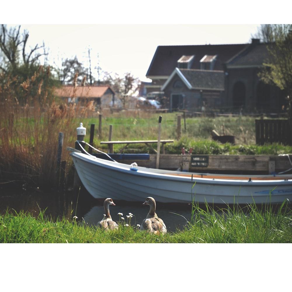 white canoe boat beside of brown wooden boardwalk