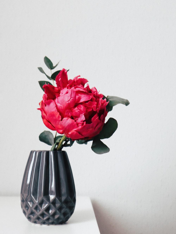 red petaled flower inside black vase