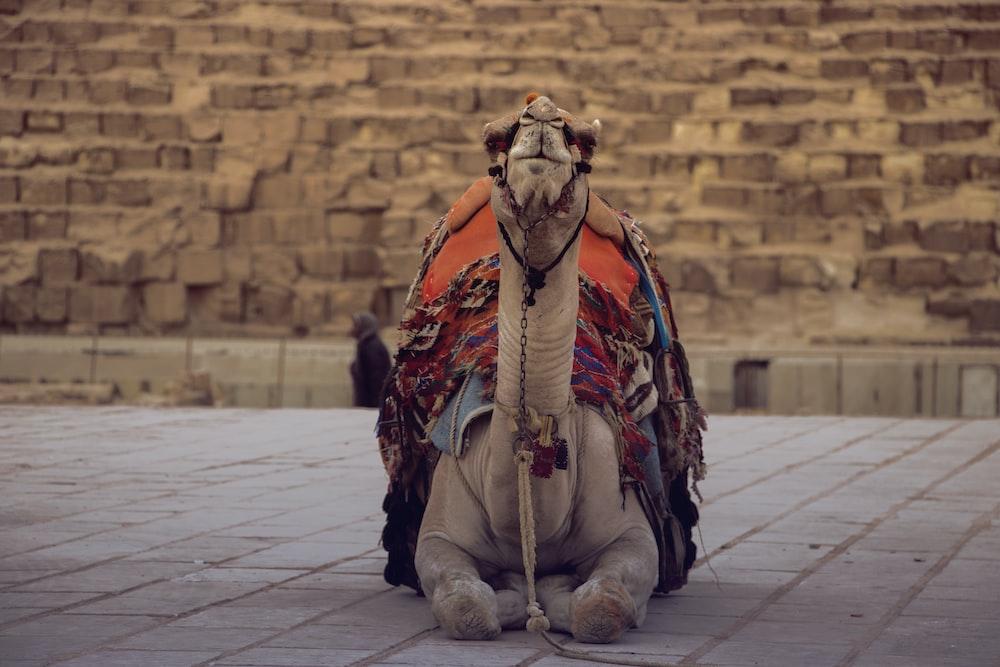 brown camel sitting on floor