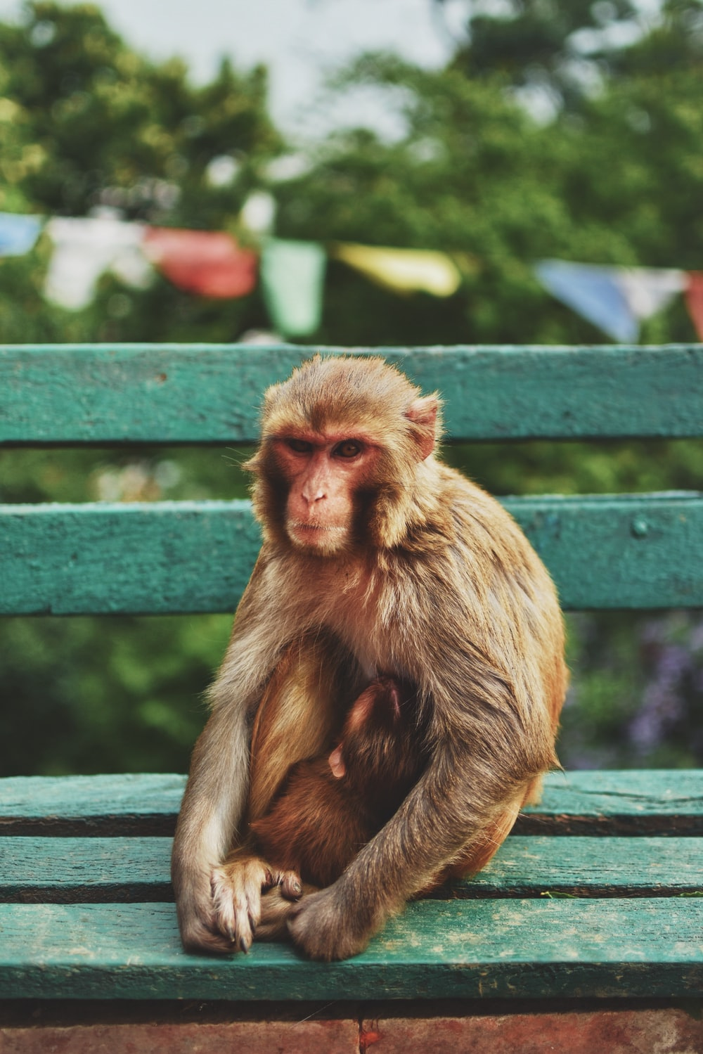 close-up photography of brown monkey sitting on green bench during daytie