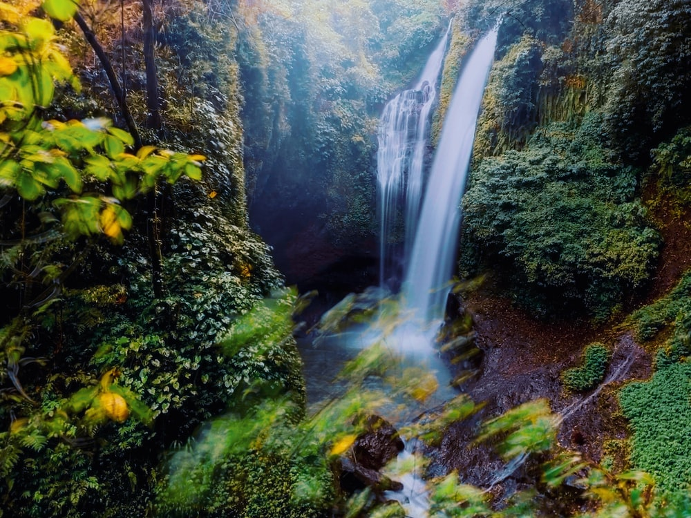 waterfalls surrounded by plants and trees