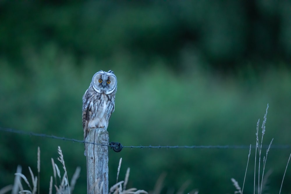 owl perched on wooden post