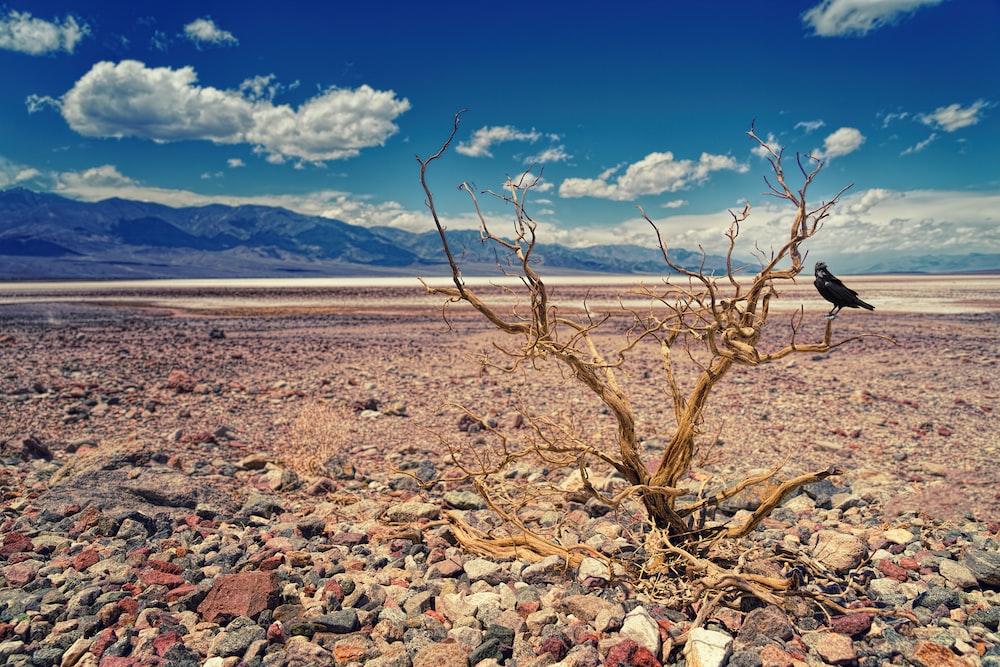 driftwood in desert