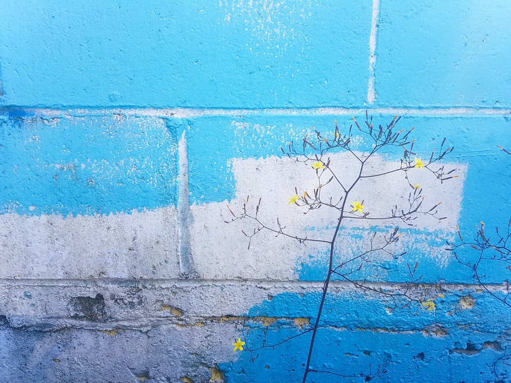 yellow petaled flowers near blue and white concrete wall