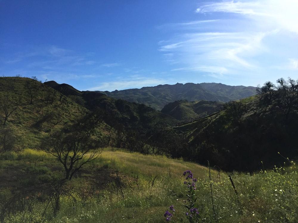 green grass hills under clear blue sky