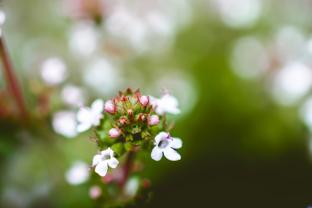 pink and white petaled flowers