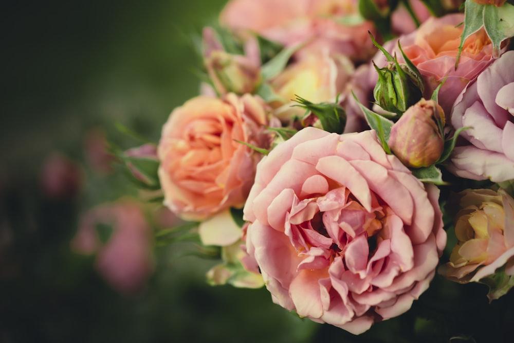 closeup photography of rose bouquet