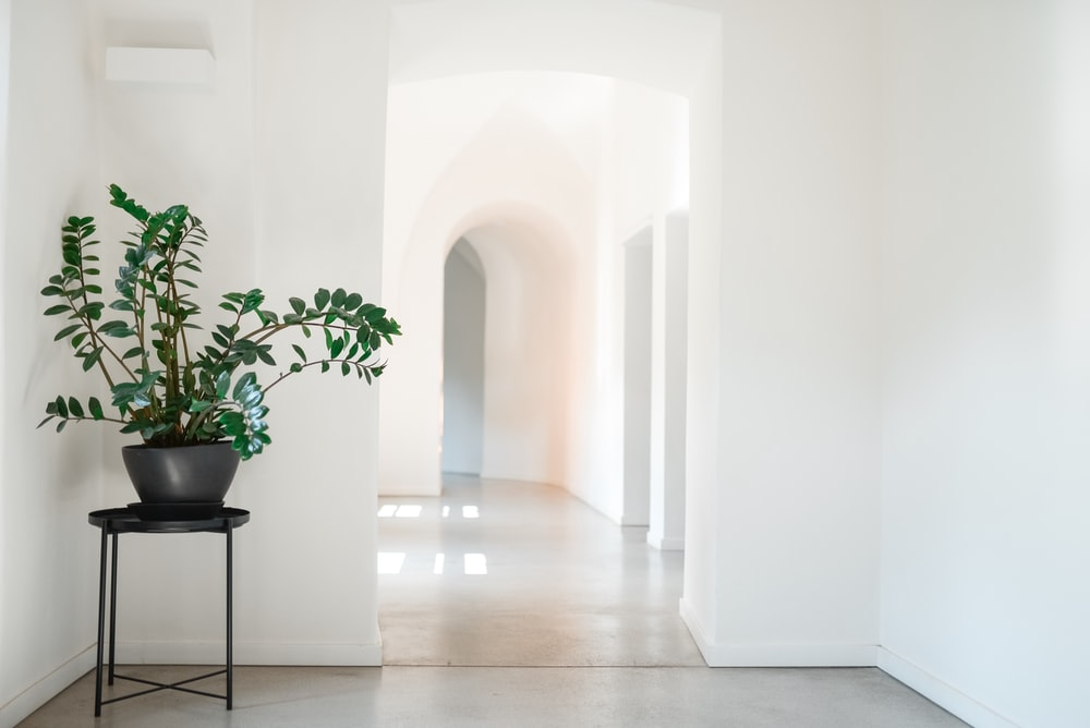 green plant in gray vase on corner