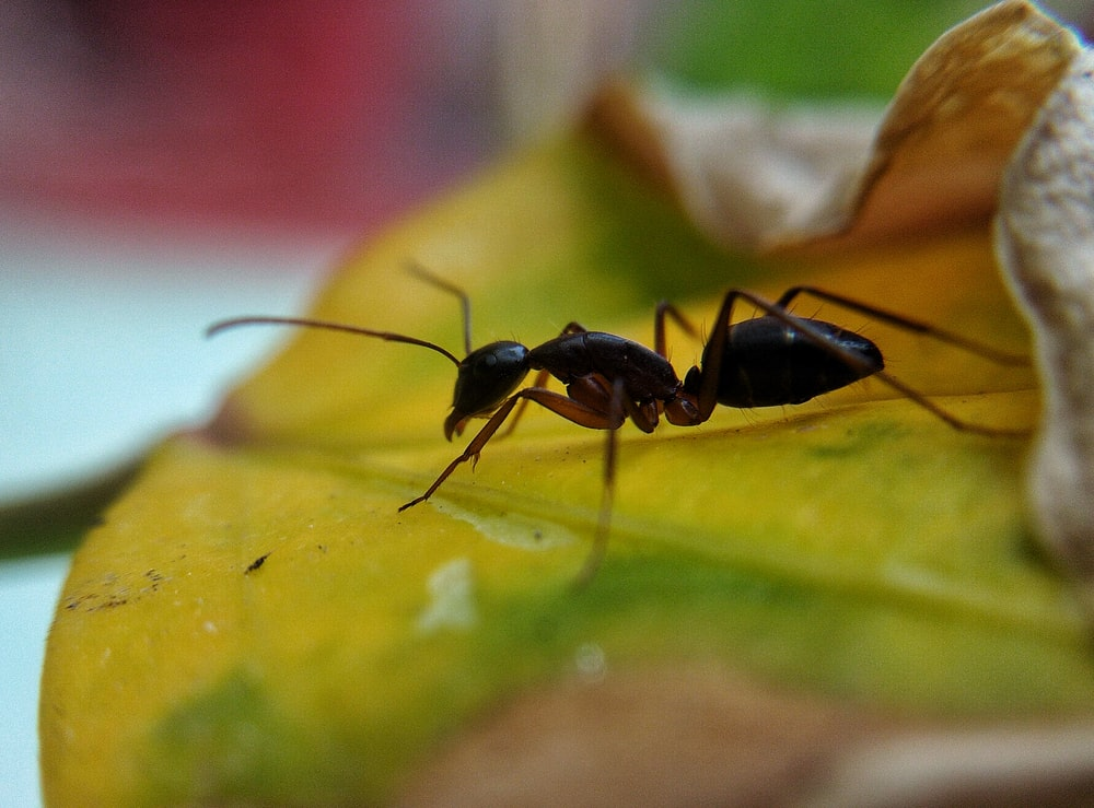 selective focus photography of ant