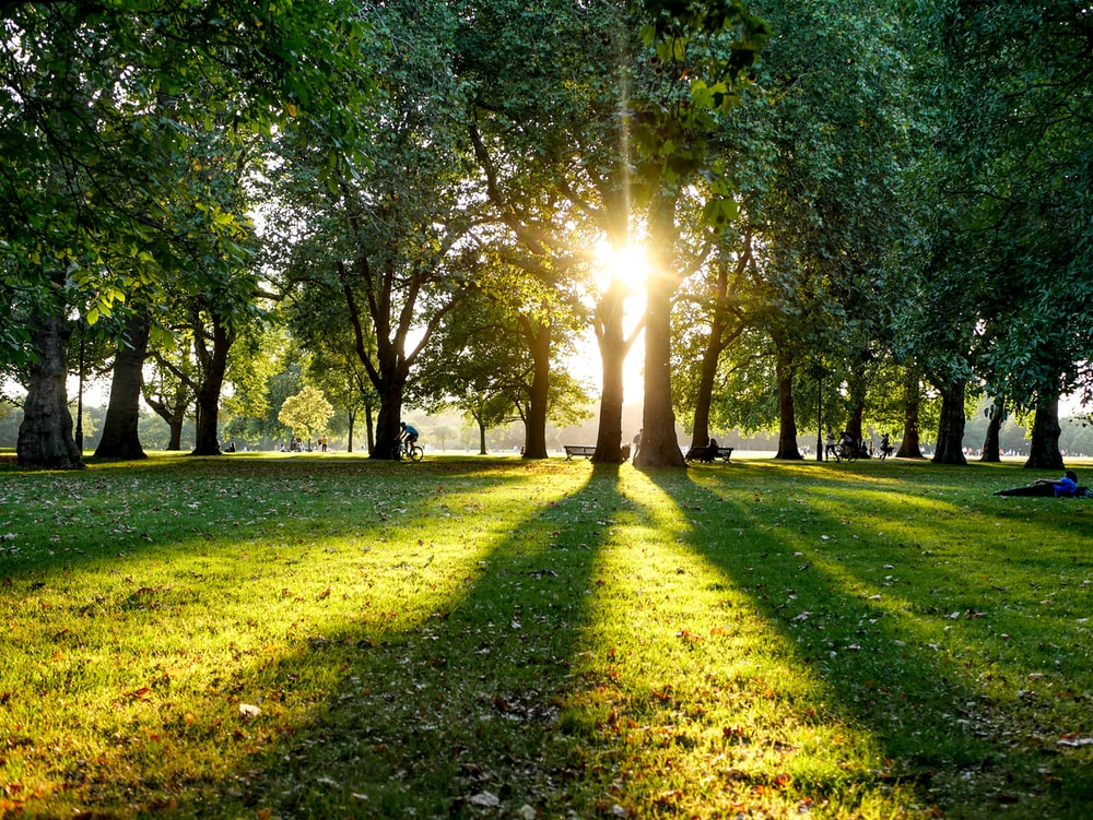 a line of trees and sunlight