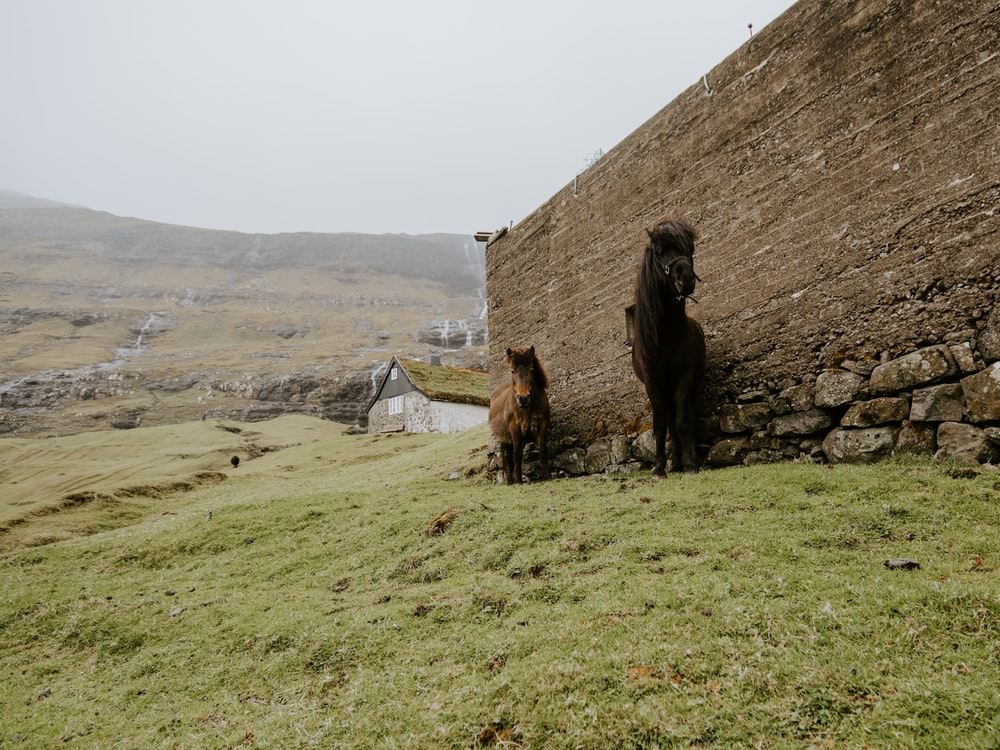 horses beside wall