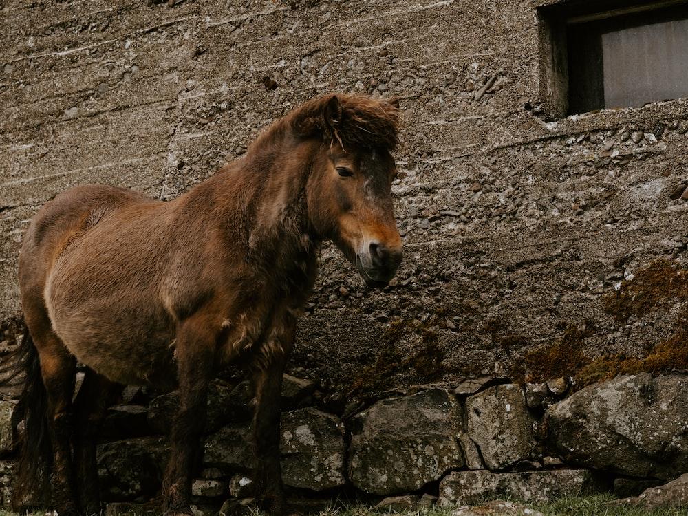 brown horse standing beside brown wall