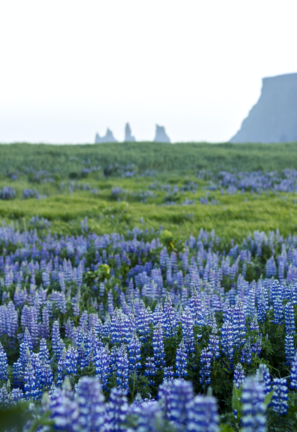 blue petaled flower field during daytime
