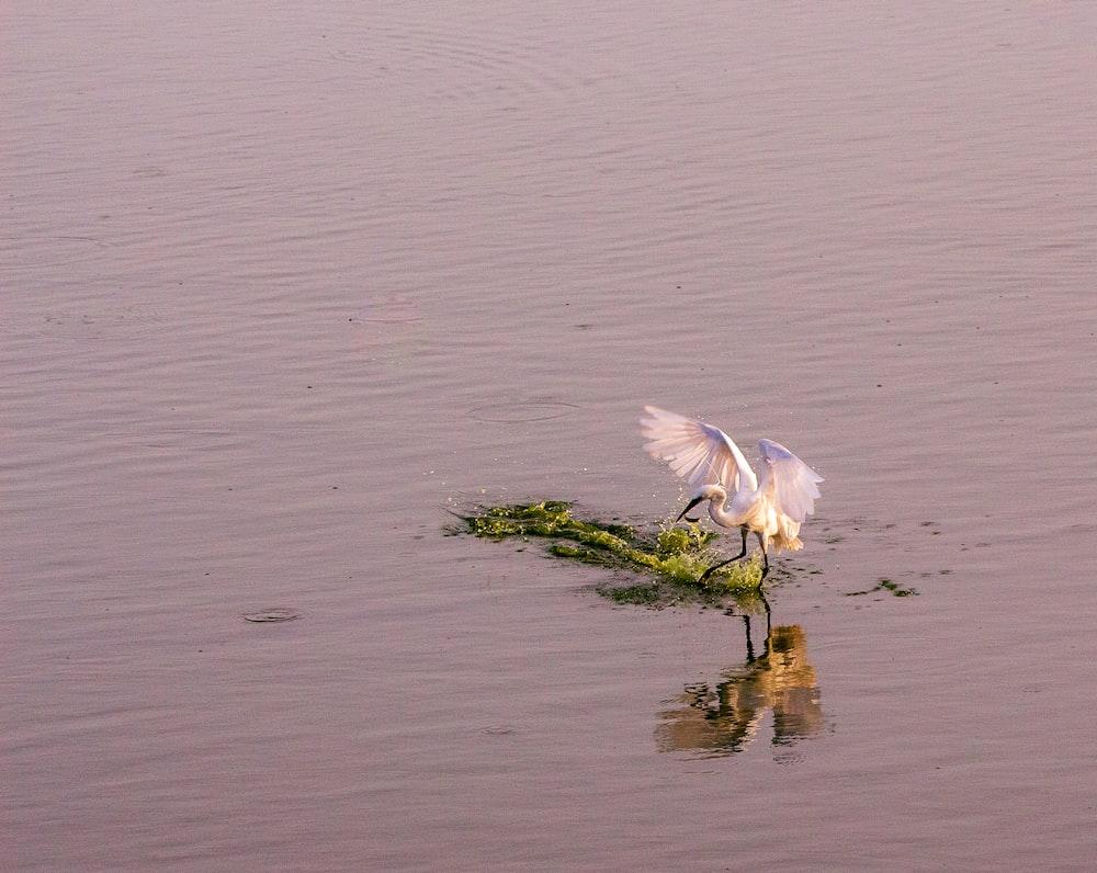 white bird at a lake