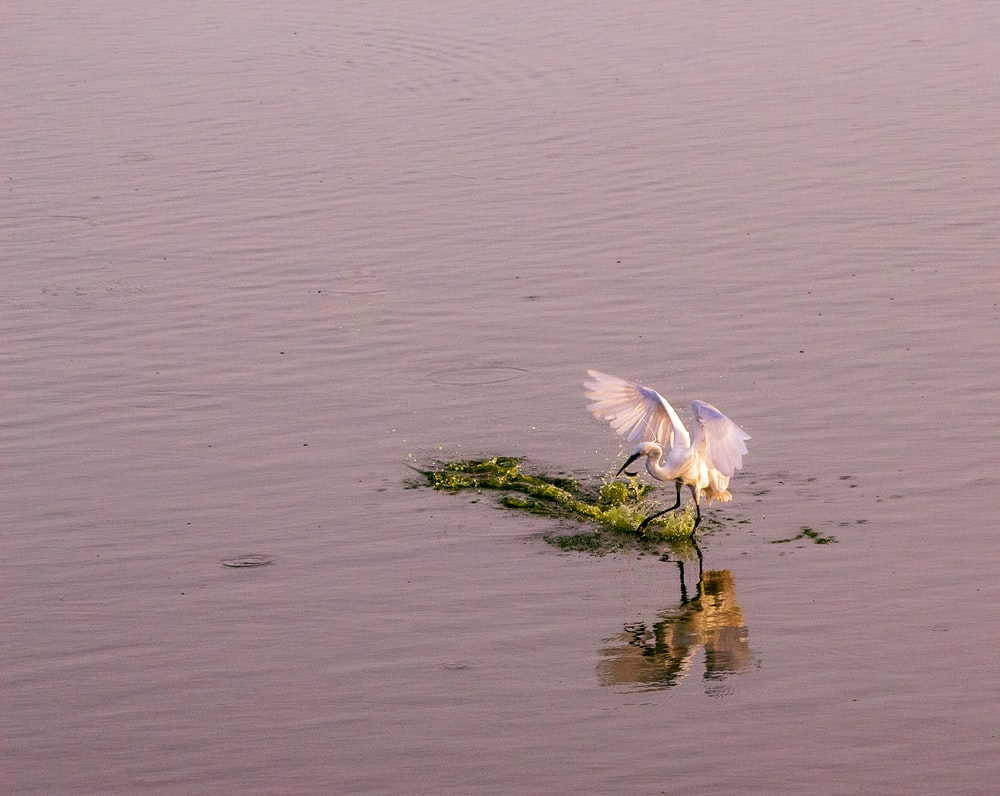 white bird at a lake
