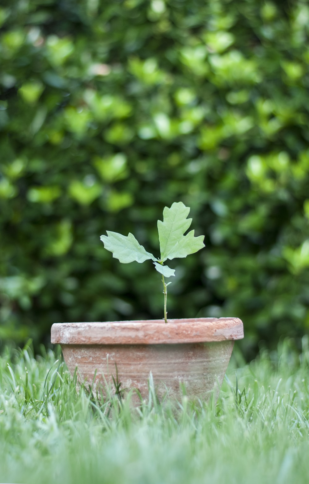 green leafed plant on pot