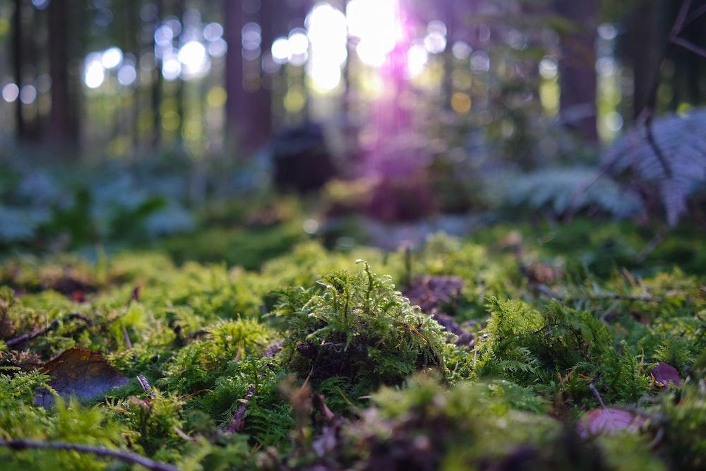 green leaf grasses