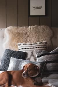 Everyone has  pillows pillows stories