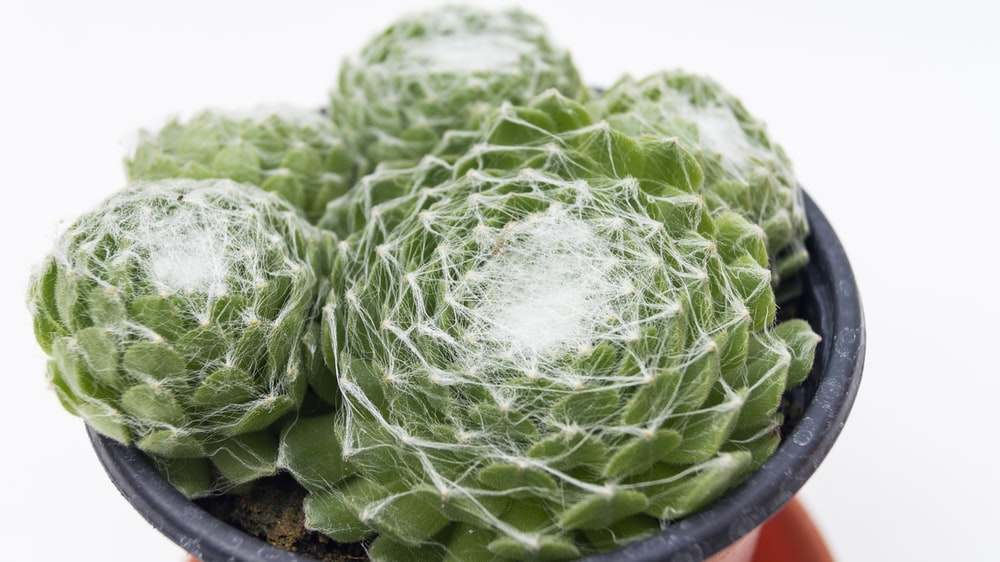 green cactus plant on gray pot