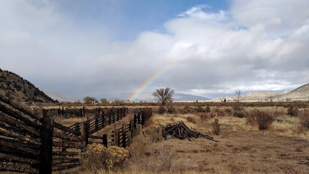 rainbow at daytime