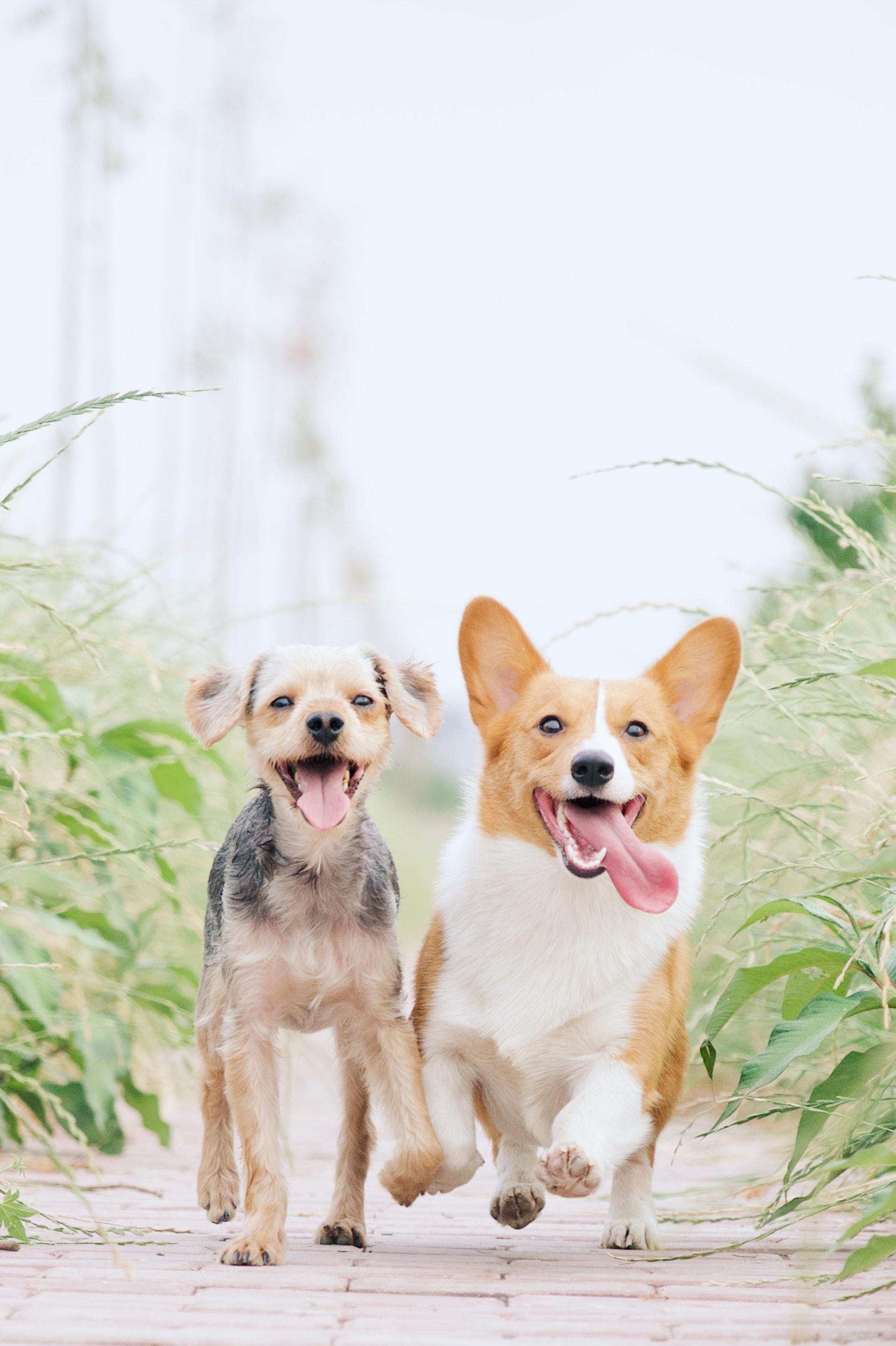 Quali sono i segni di disidratazione nel cane
