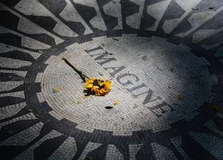 yellow petaled flower left on Imagine tile