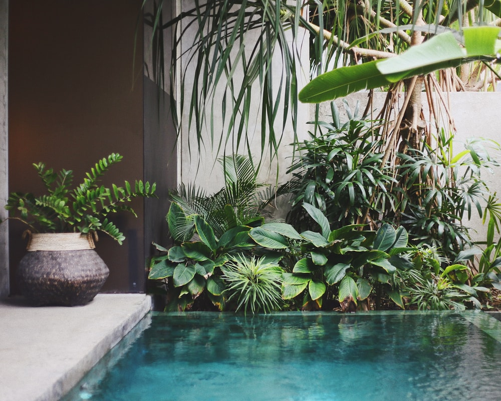 body of water near plants and wall