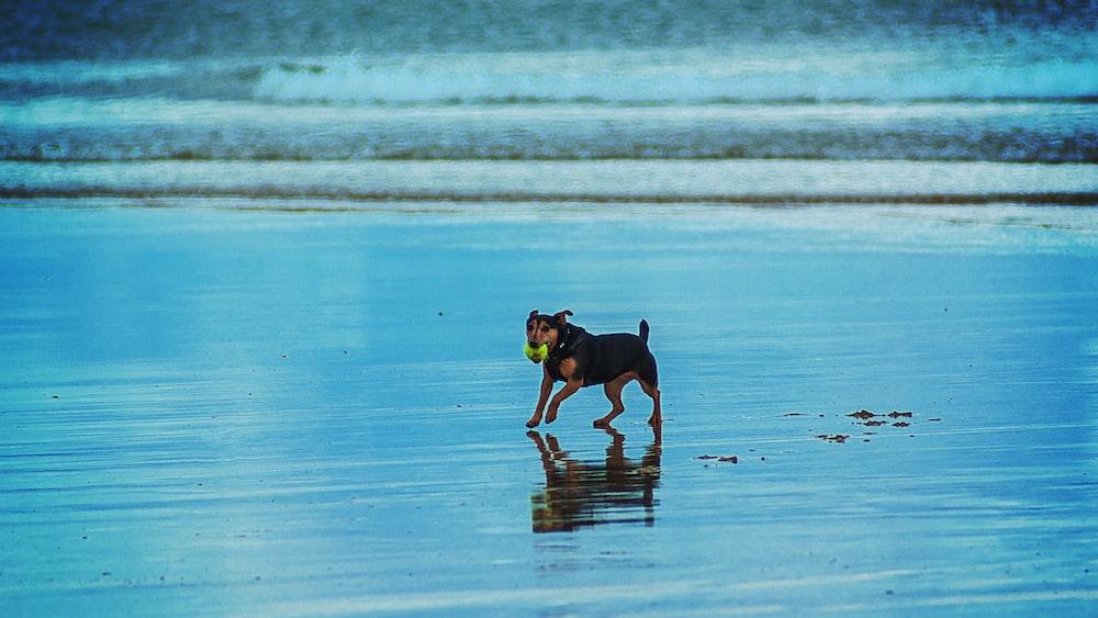 dog in seashore