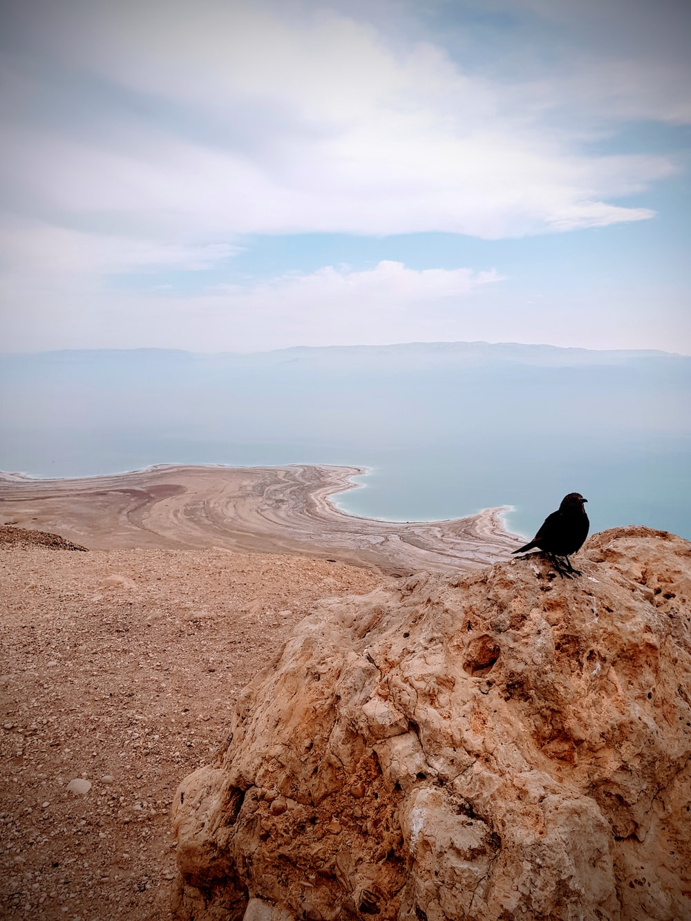 black crow on a rock overlooking the sea