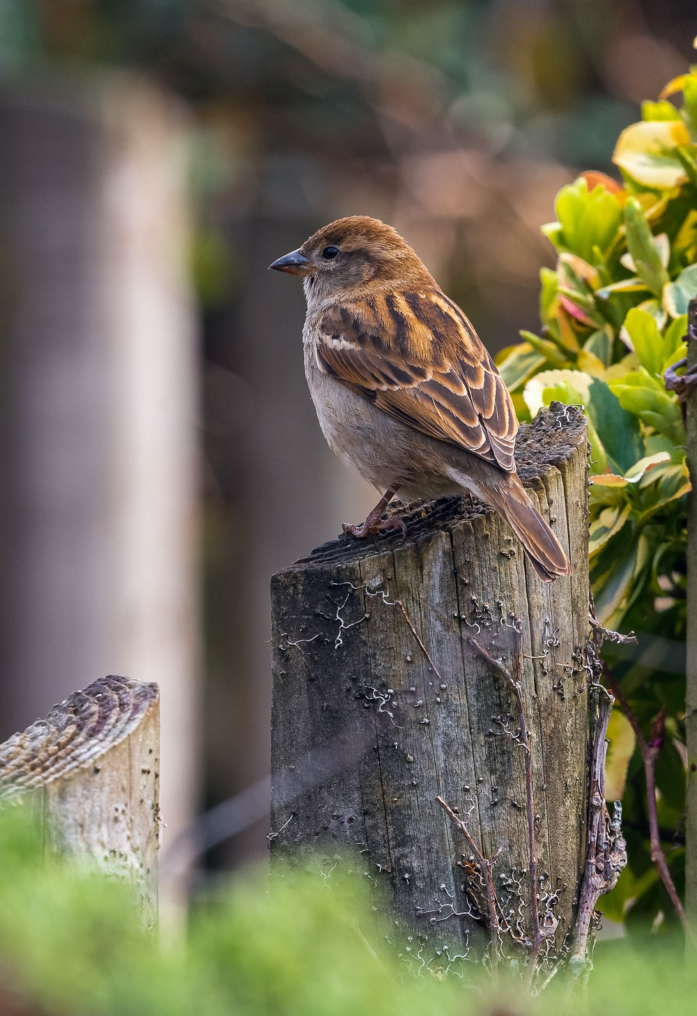 brown bird in a wood near a plant during daytime close-up photography